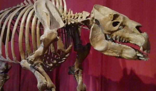 museu-argentino-de-ciencias-naturais-buenos-aires-argentina-2