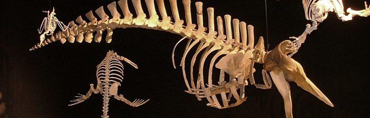 Museu Paleontológico de Bariloche
