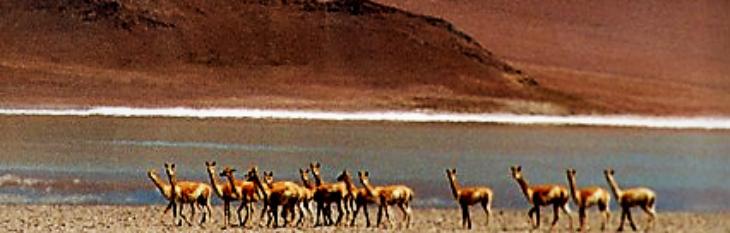 Lagoa de Diamante Mendoza Argentina 4