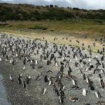Ilha Martillo (Pinguinera)