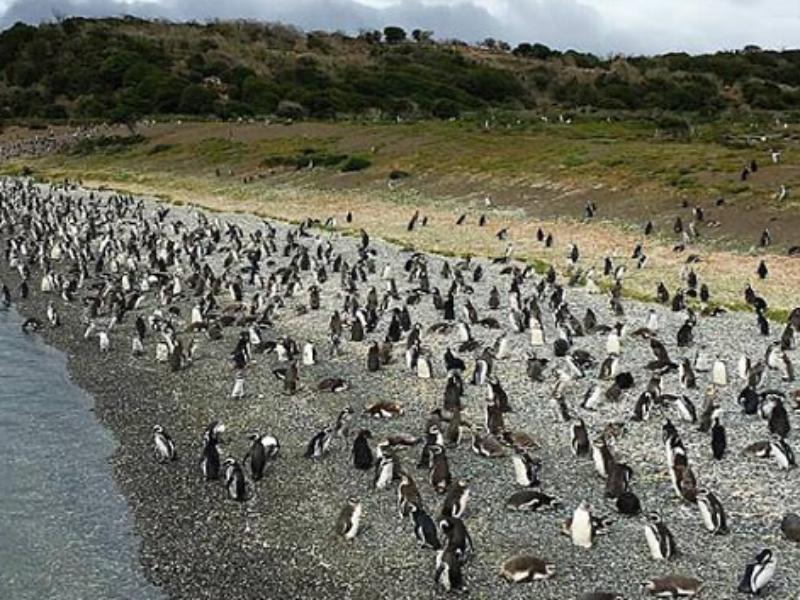 Ilha Martillo Pinguinera